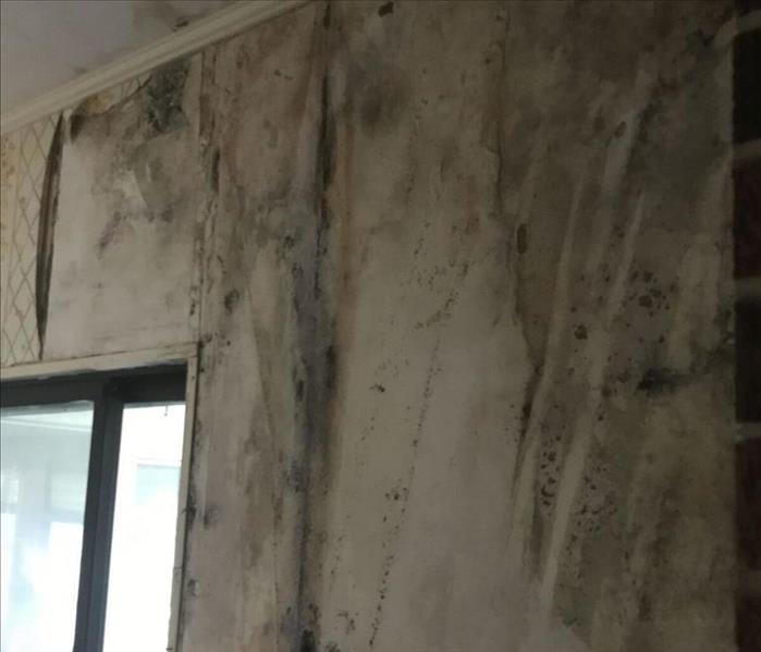 Mold Behind Wall