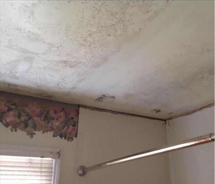 Mold Remediation Mold Prevention